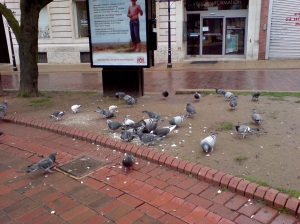 Pigeons in town square in Leicester