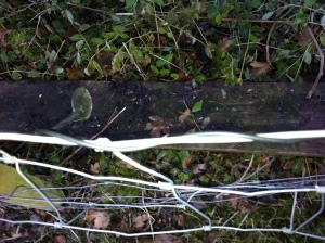 Contact microphone wrapped around wire fence