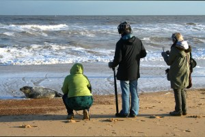 The group capture video and audio recordings of the seal pups on Norfolk beach