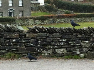 Jackdaws at Hill Top