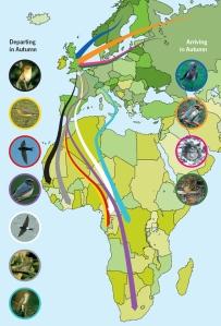 Bird migration map by gardenbird.co.uk