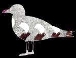 Herring gull, digital illustration, 2016