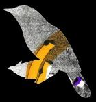 Wryneck call, digital illustration, 2016