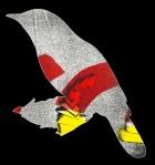 Wryneck, digital illustration, 2016