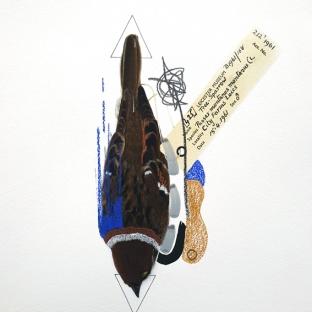 Tree Sparrow (Cobalt Blue). Size: A3